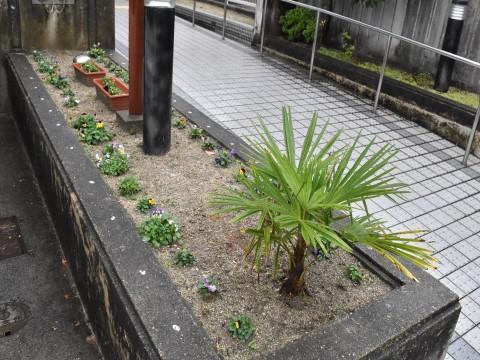 福岡市西区老人ホームハーヴェスト姪浜いこい館園庭観葉植物